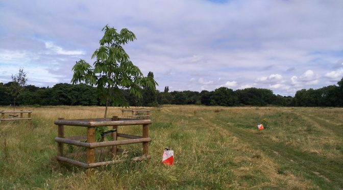 GLOSS 2019: Barnes Common, Sunday 30 June